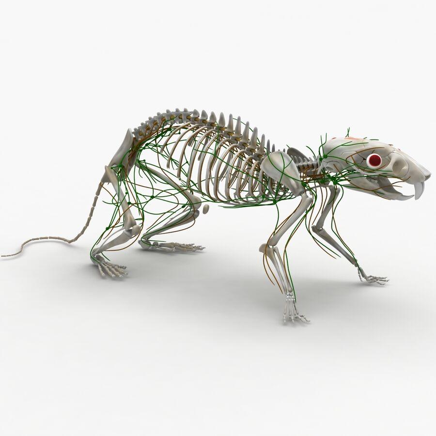 Текстурированная анатомия самцов и самок крыс royalty-free 3d model - Preview no. 18