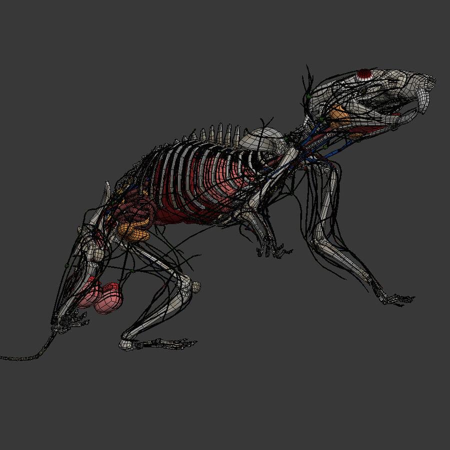 Текстурированная анатомия самцов и самок крыс royalty-free 3d model - Preview no. 22