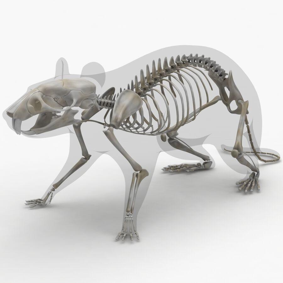 Текстурированная анатомия самцов и самок крыс royalty-free 3d model - Preview no. 3