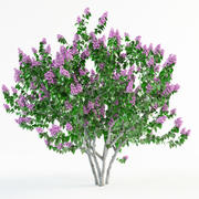 lilac syringa bush 2(1) 3d model