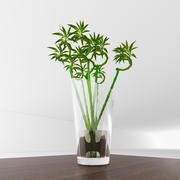 Bambus z wazą 3d model