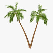 Palm 07 3d model