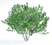 丁香紫丁香布什 3d model