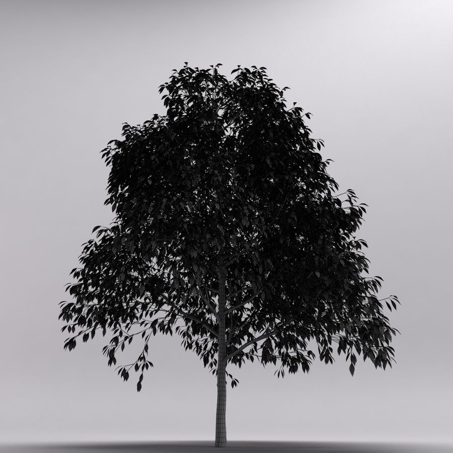 Tree royalty-free 3d model - Preview no. 7
