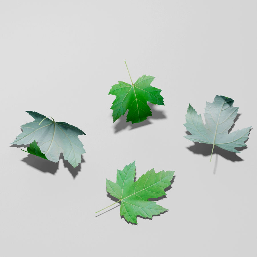 Sycamore maple leaf (Acer pseudoplatanus) royalty-free 3d model - Preview no. 7