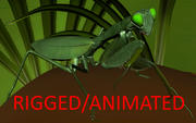 Mantis RIGGED / ANIMATED 3d model
