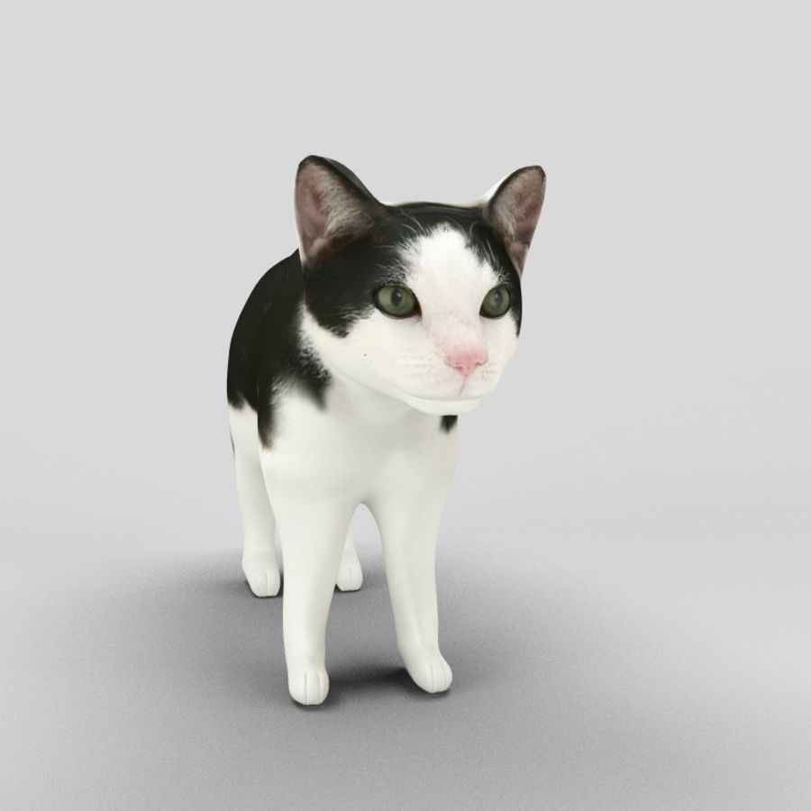 Cat royalty-free 3d model - Preview no. 9