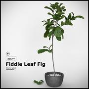Fiddle Leaf Fig 3d model