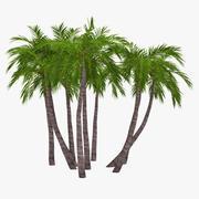 Palm 017 3d model