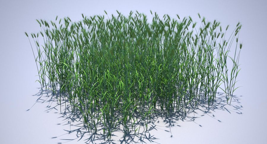 Campo de trigo duro royalty-free 3d model - Preview no. 27