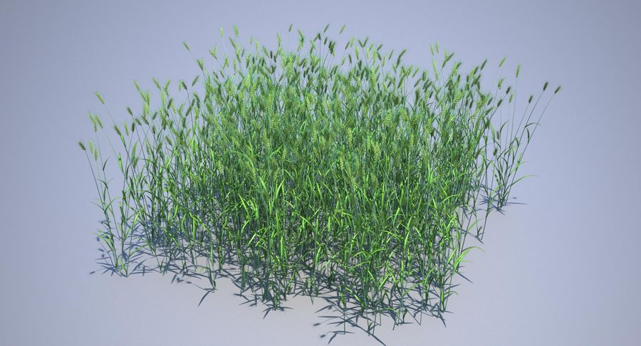 Campo de trigo duro royalty-free 3d model - Preview no. 12