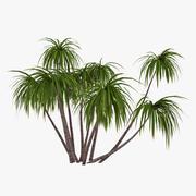 Palm 013 3d model
