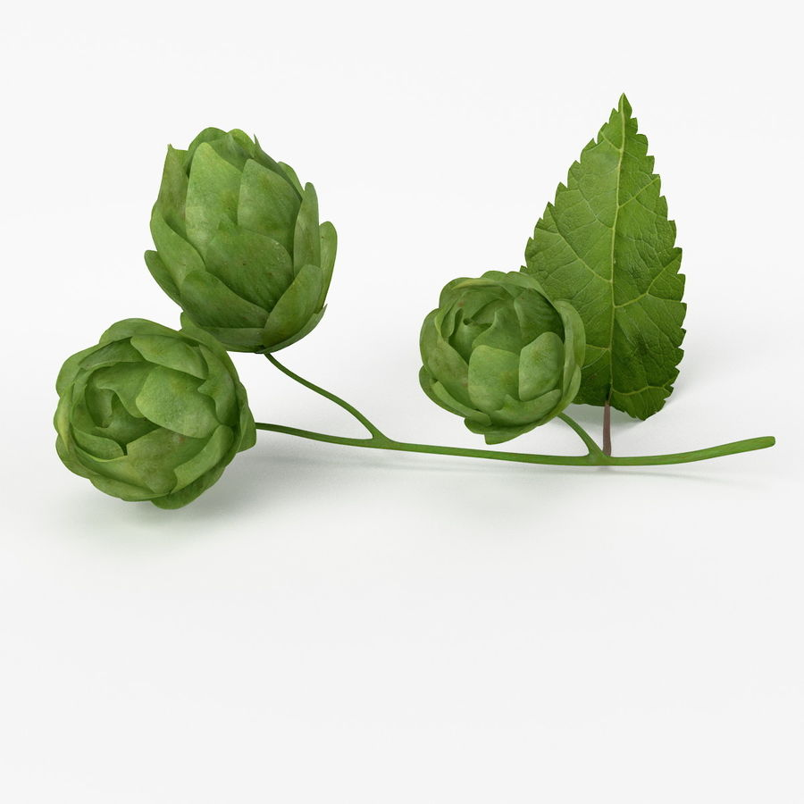 Realistic Hops royalty-free 3d model - Preview no. 2