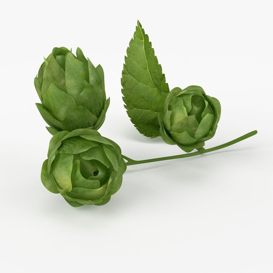 Realistic Hops royalty-free 3d model - Preview no. 3