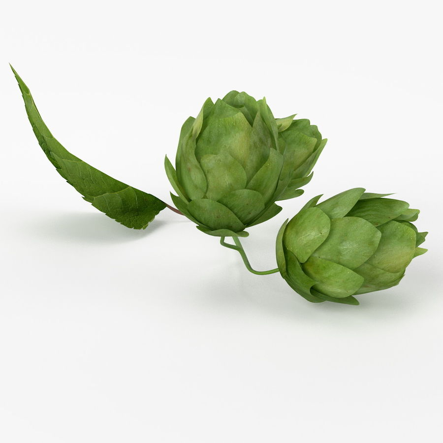 Realistic Hops royalty-free 3d model - Preview no. 4