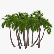 Palm 018 3d model