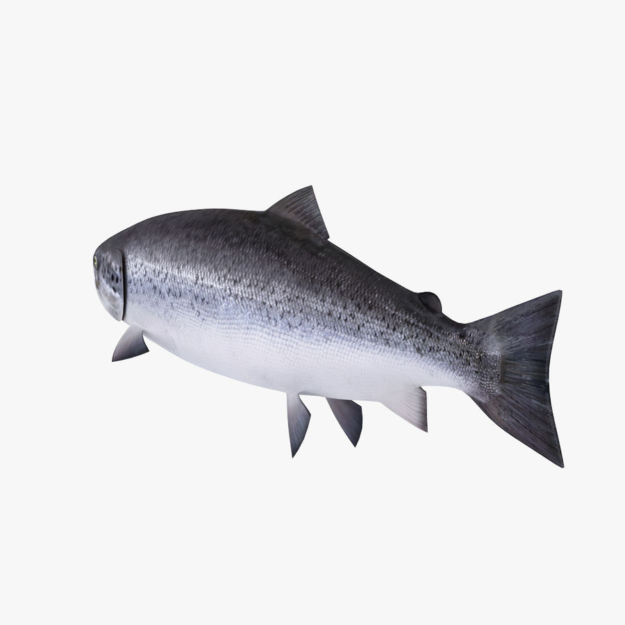 Salmone atlantico royalty-free 3d model - Preview no. 2