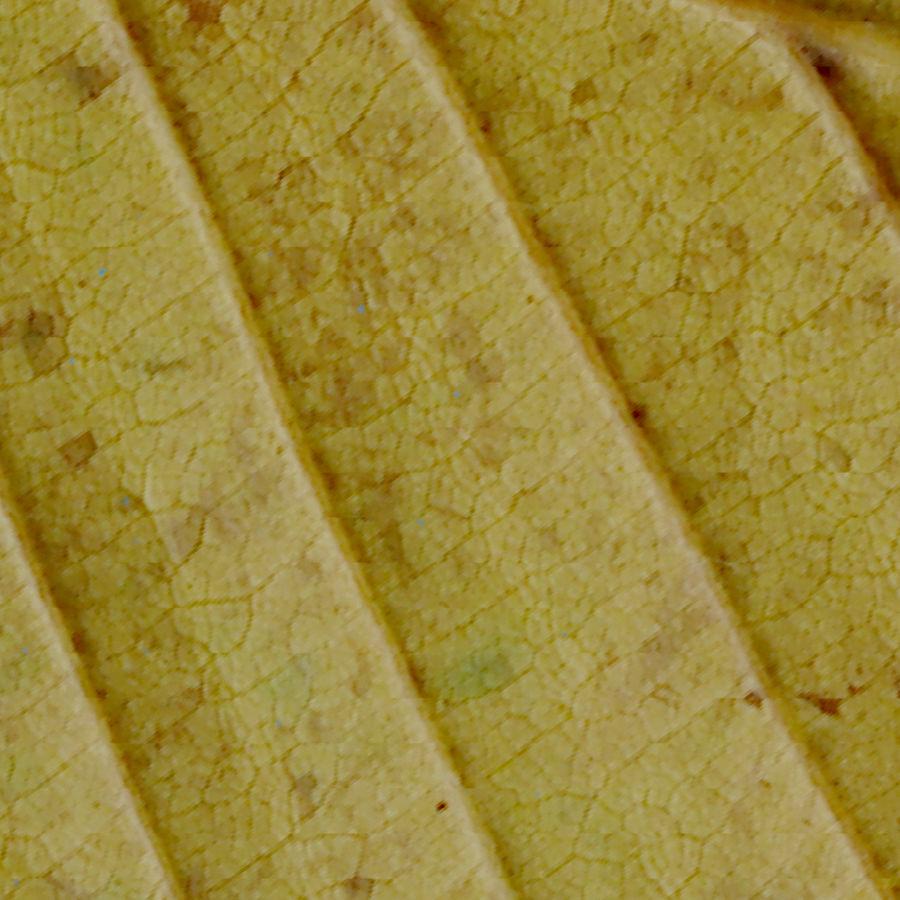 鹅耳autumn秋叶(Carpinus betulus) royalty-free 3d model - Preview no. 15