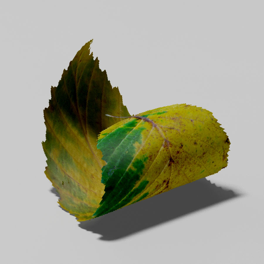 鹅耳autumn秋叶(Carpinus betulus) royalty-free 3d model - Preview no. 7