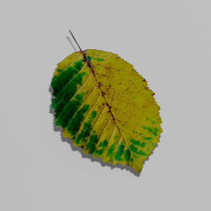 鹅耳autumn秋叶(Carpinus betulus) royalty-free 3d model - Preview no. 13