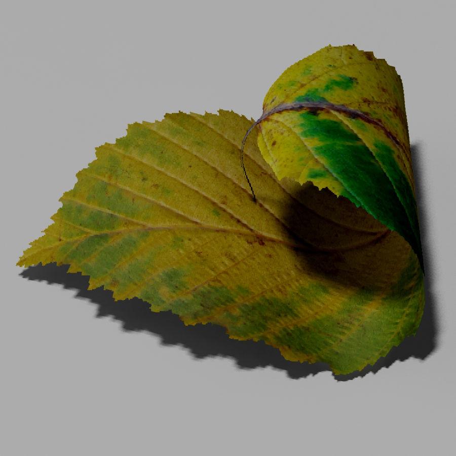 鹅耳autumn秋叶(Carpinus betulus) royalty-free 3d model - Preview no. 8