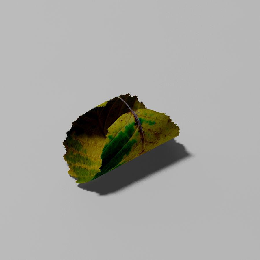 鹅耳autumn秋叶(Carpinus betulus) royalty-free 3d model - Preview no. 6