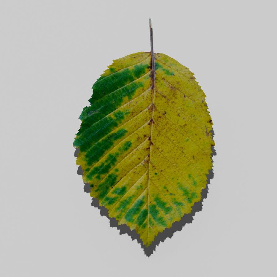 鹅耳autumn秋叶(Carpinus betulus) royalty-free 3d model - Preview no. 16