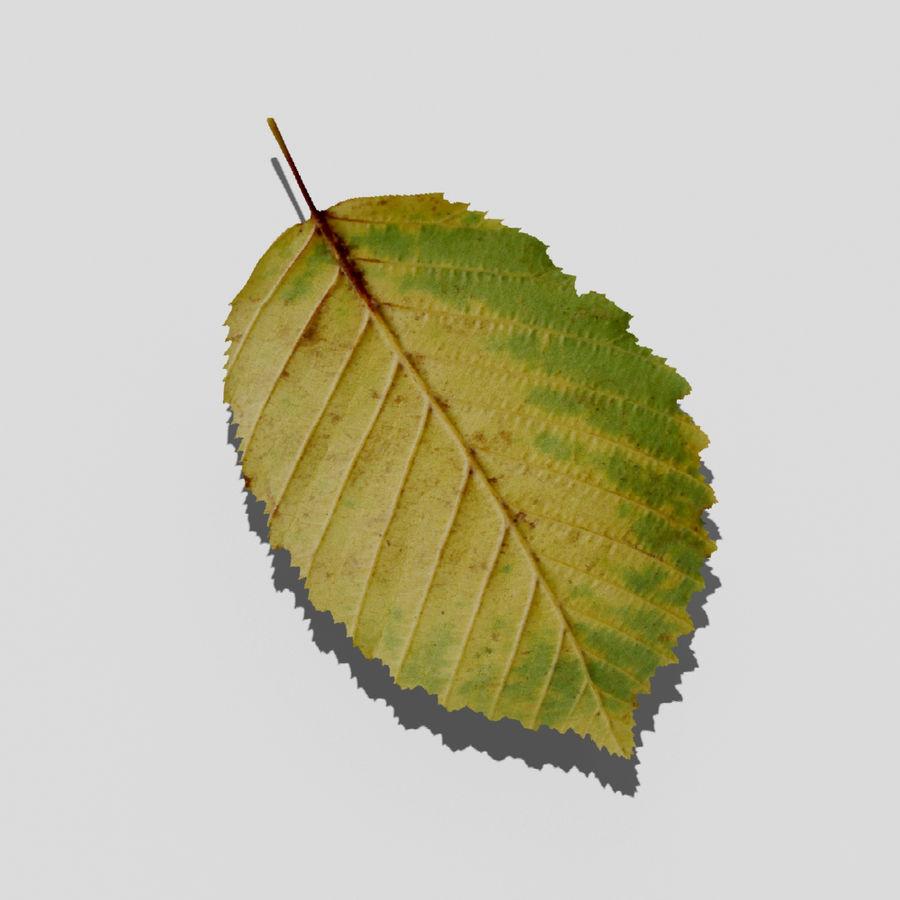 鹅耳autumn秋叶(Carpinus betulus) royalty-free 3d model - Preview no. 3