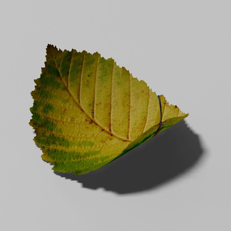鹅耳autumn秋叶(Carpinus betulus) royalty-free 3d model - Preview no. 11