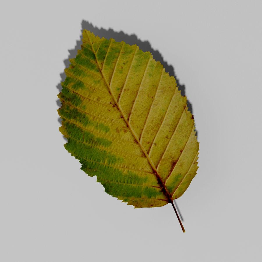 鹅耳autumn秋叶(Carpinus betulus) royalty-free 3d model - Preview no. 10