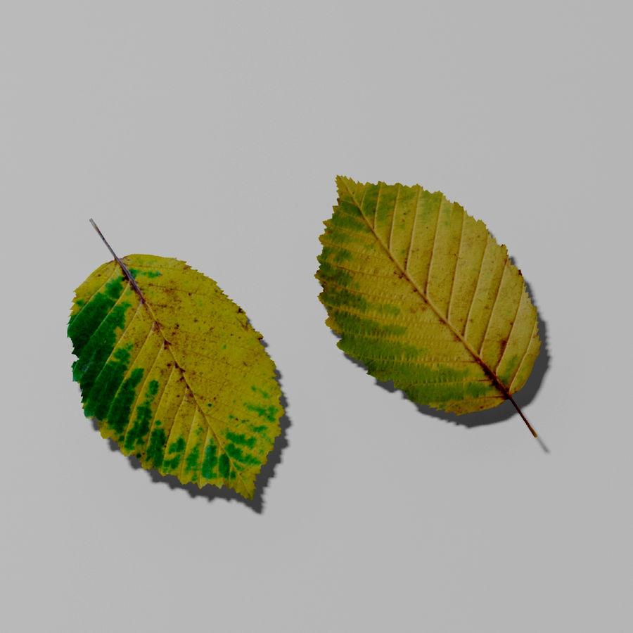 鹅耳autumn秋叶(Carpinus betulus) royalty-free 3d model - Preview no. 4