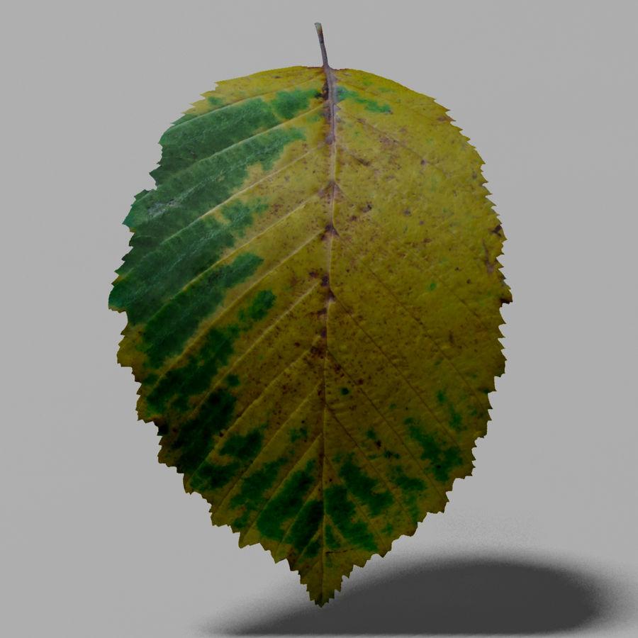 鹅耳autumn秋叶(Carpinus betulus) royalty-free 3d model - Preview no. 12