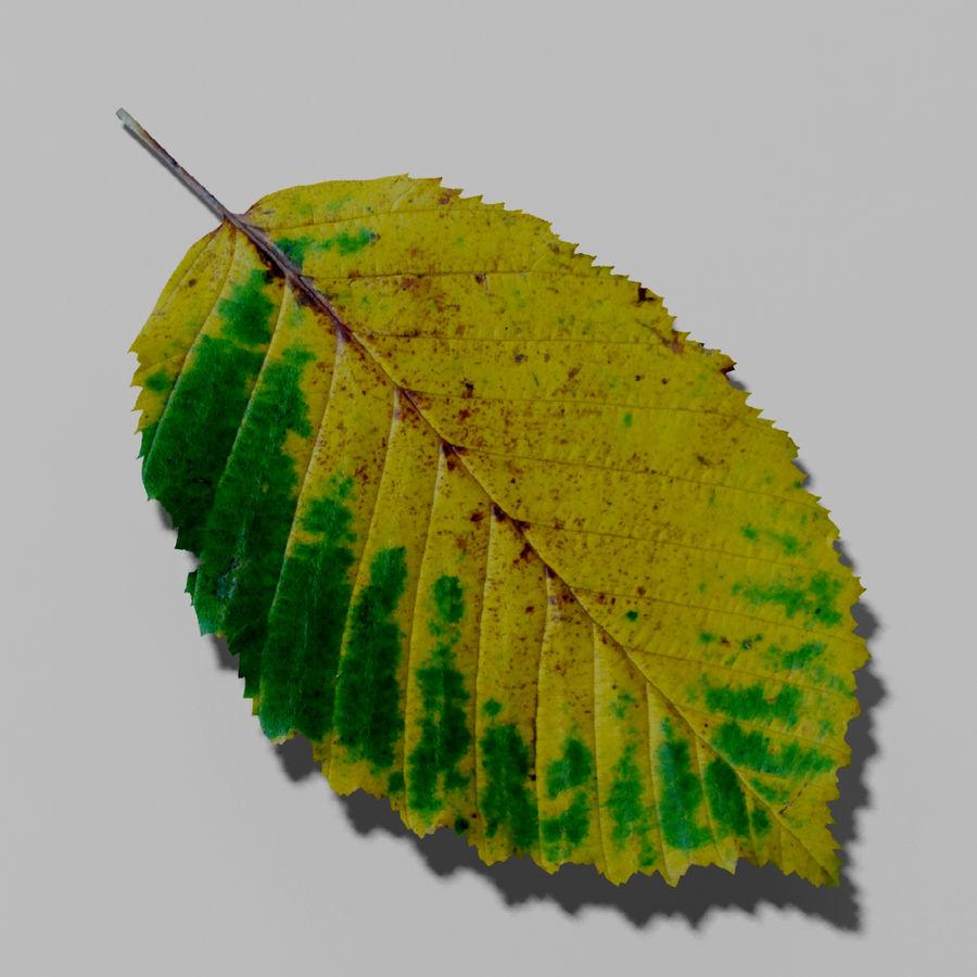 鹅耳autumn秋叶(Carpinus betulus) royalty-free 3d model - Preview no. 2
