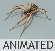 spider low poly 3d model