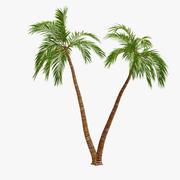 Palm 09 3d model