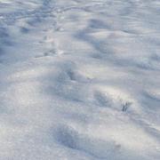 雪3 3d model