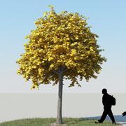 メープルツリー秋13 3d model