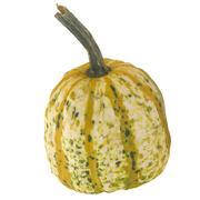 Pumpkin 3 3d model