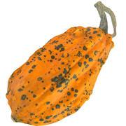 Pumpkin 12 3d model