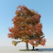 メープルツリー秋2 3d model