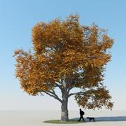 Árvore de bordo Outono 3 3d model