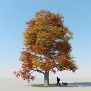 メープルツリー秋6 3d model