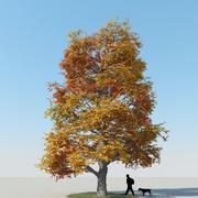 Albero di acero autunno 7 3d model