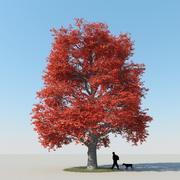 Outono de árvore de bordo 9 3d model