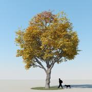 メープルツリー秋10 3d model