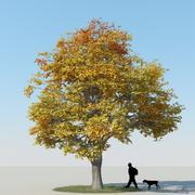 メープルツリー秋11 3d model