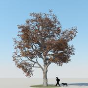 メープルツリーの秋15 3d model