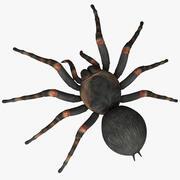 塔兰图拉毒蛛 3d model