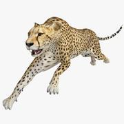 Gepard 2 Poza 2 3d model