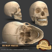 Человеческий череп 3d model